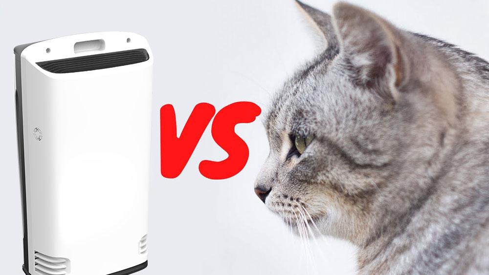 may loc khong khi hut long meo boneco p340 - Top 3 máy lọc không khí hút lông mèo dành cho mẹ bầu và thai nhi